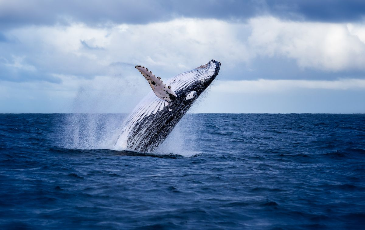 Ethereum Whales Gobble 70% of ETH